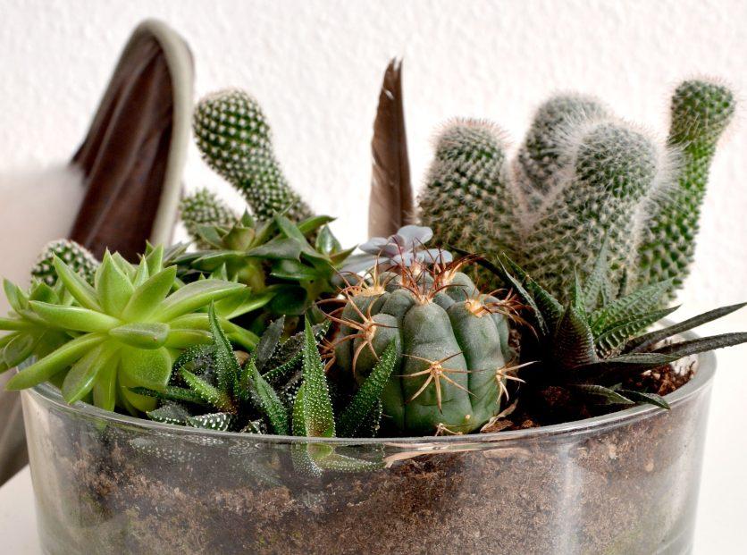 Sukkulenten vermehren