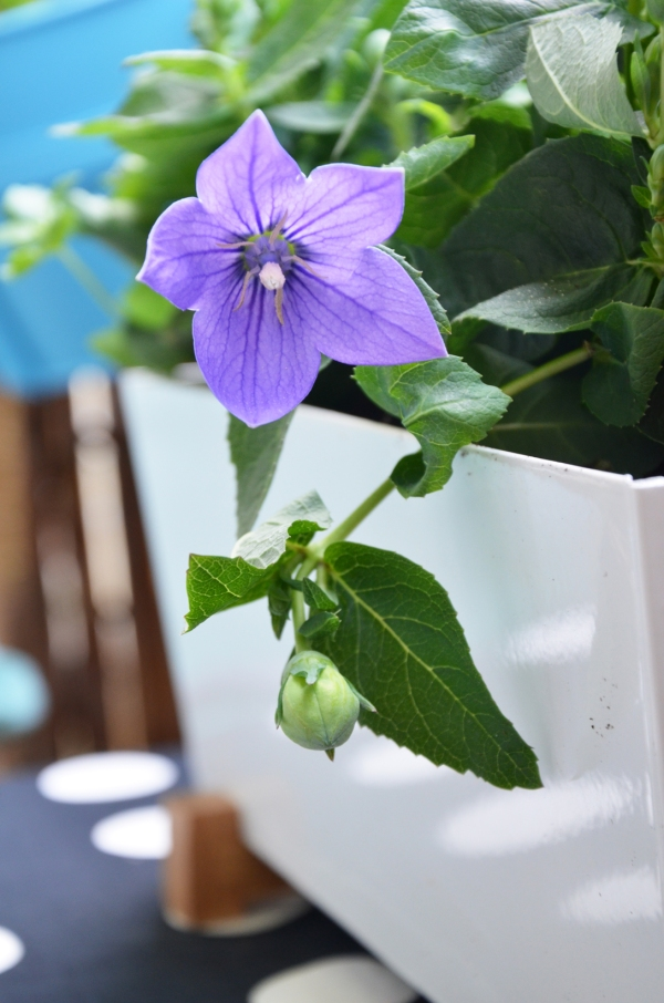Balkon Blumendetail - annablogie