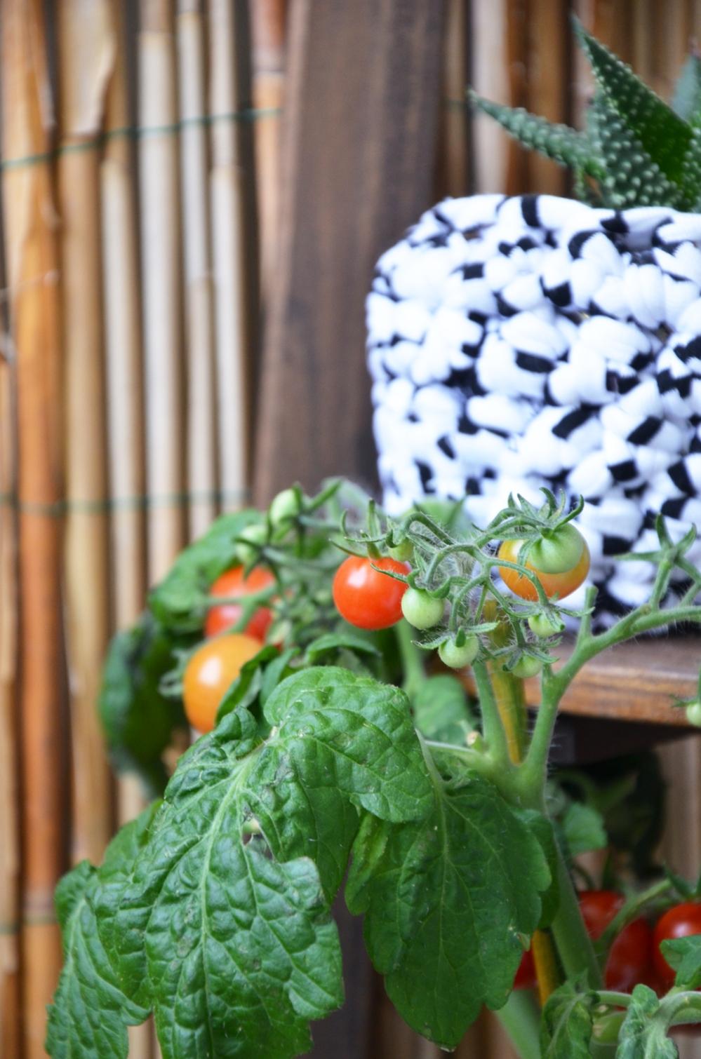 Balkon Tomate - annablogie
