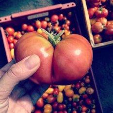 Herz-Tomate in Hamburg