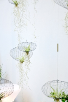 Pflanzenquallen von @carolijnslottje