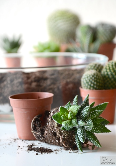 Kakteen und Sukkulenten pflanzen und pflegen