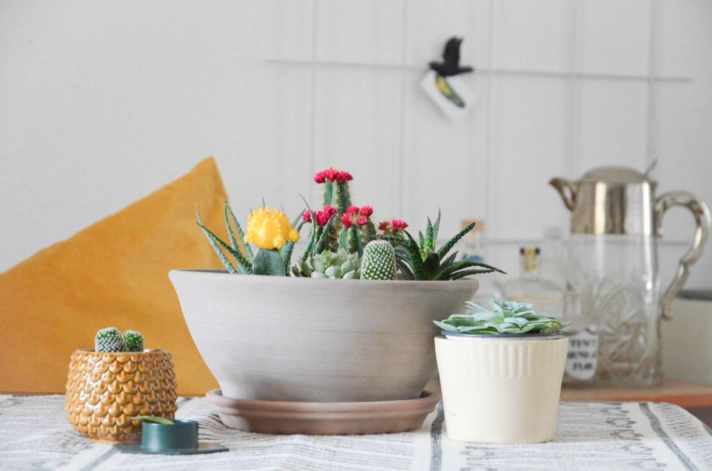 DIY: Eigenen Kakteen-Garten anlegen